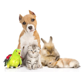 Group of pets together in front. Isolated on white background