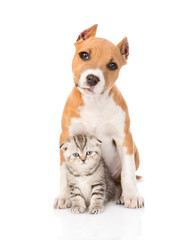kitten and puppy sitting together. isolated on white background