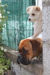 Cachorro encima de boxer