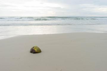 Coconut shells on the beach
