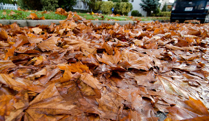 Road covered by fallen leaves