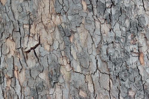 Fotobehang Textures Maple Tree Bark Close-up