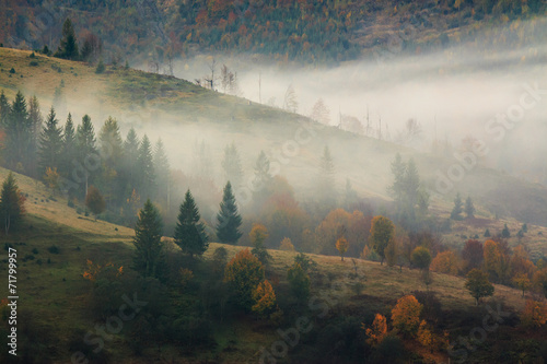 foggy mountain forest - 71799957