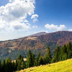 green forest on hillside meadow