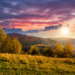 yellow trees on hillside on mountain background at sunset