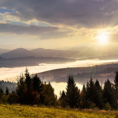 forest over foggy valley in autumn mountains at sunset