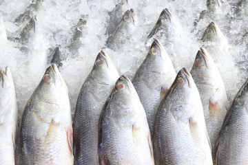 coolled fish, fresh bright trout,sale seafood