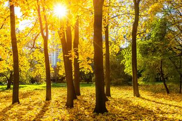 Sunny autumn park