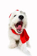 canvas print picture - Christmas puppy