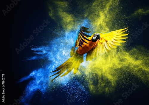 Flying Ara parrot over colourful powder explosion - 71802179