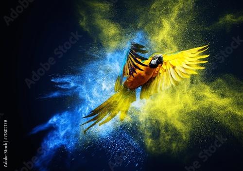 Leinwanddruck Bild Flying Ara parrot over colourful powder explosion