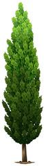 A Swedish columnar plant