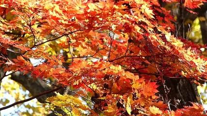 森の秋の風景・紅葉_23