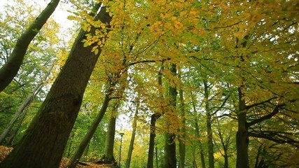 Beautiful autumn trees with colored leaves in park