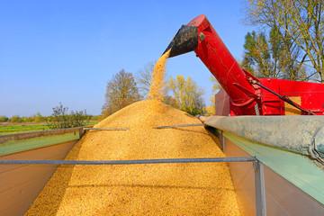Overloading of maize