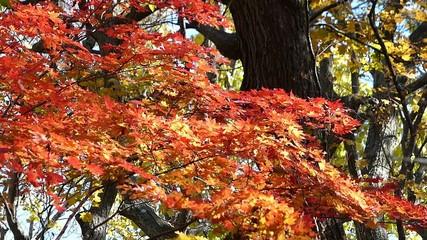 森の秋の風景・紅葉_22