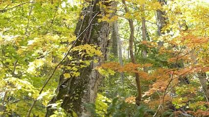 森の秋の風景・紅葉_19