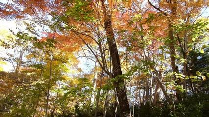 森の秋の風景・紅葉_17