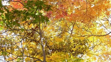 森の秋の風景・紅葉_16