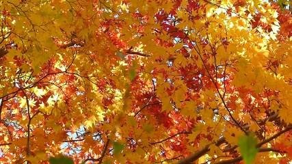 森の秋の風景・紅葉_13