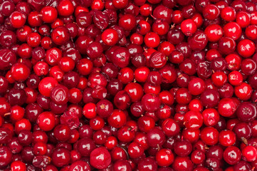 cranberries background