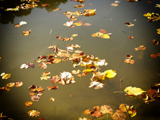 river covered by colorful leaves