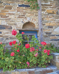 Greece, Tinos island, stone wall with blue window and flowers