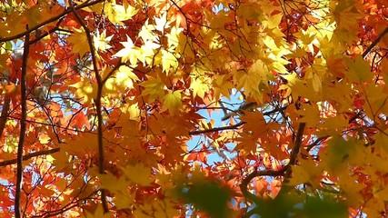 森の秋の風景・紅葉_10