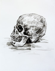 Drawing black and white of  human skull