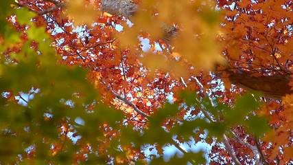 森の秋の風景・紅葉_6