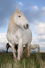 Cavalli al pascolo in alta montagna