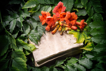 Campsis radicans flowers on old open book