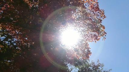 森の秋の風景・紅葉_4