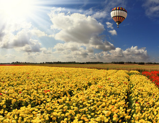 Flying over fields of huge multicolored balloon