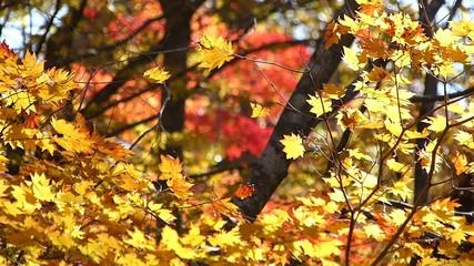 森の秋の風景・紅葉_1
