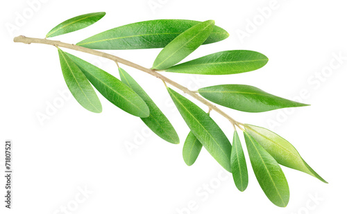 Fotobehang Olijfboom Olive branch isolated on white