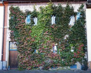 Bewachsene Fassade
