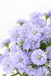 クジャクソウの花束のアップ