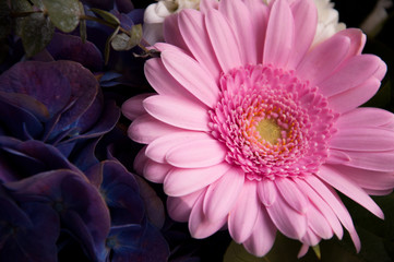 Bright pink chrysanthemum in a bouquet 2