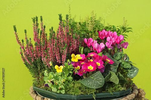 Fotobehang Pansies composition florale d'automne