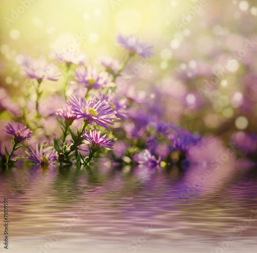 Plexiglas Lilac Violet flowers
