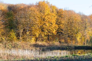 Autumn wood landscape