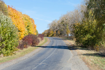 Landscape - asphalt highway with yellow and green trees