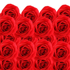 collage background of fresh beautiful red roses