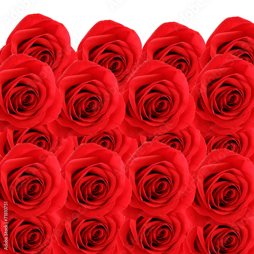 canvas print picture collage background of fresh beautiful red roses