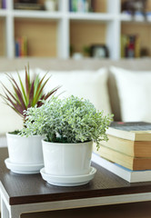 Home decoration with plant book shelf