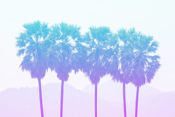 Sugar palm in pastel styles.