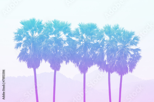 Deurstickers Palm boom Sugar palm in pastel styles.