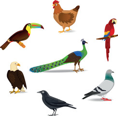 Birds - Illustration