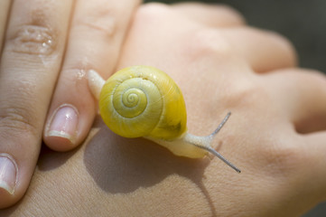 Yellow snail on a child's hand.